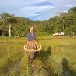 Buffaloe Riding